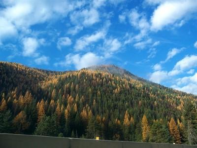 Family Travel to Yellowstone