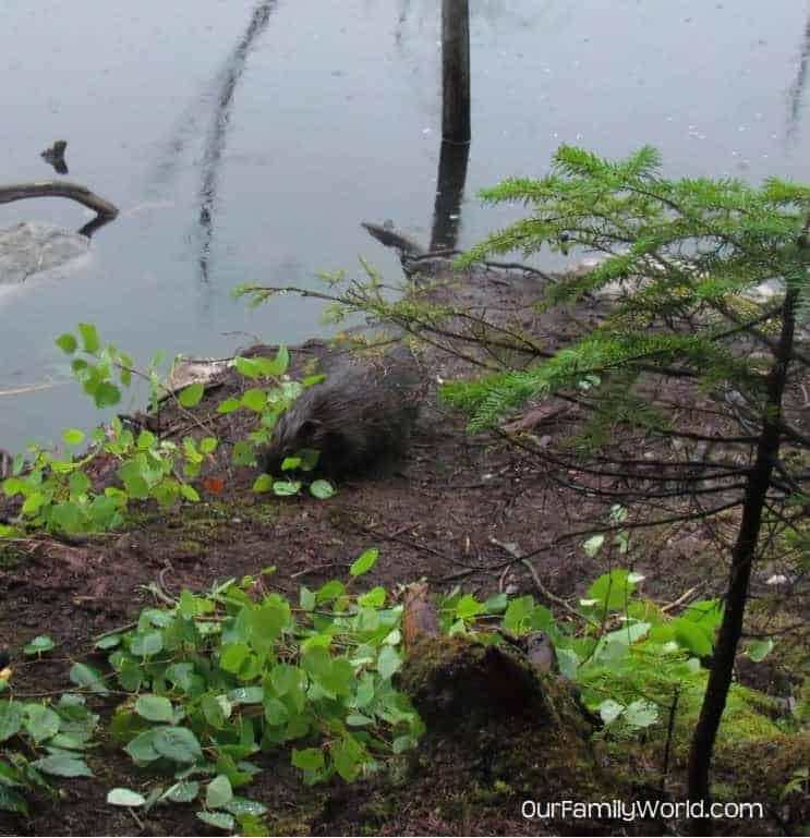 go-honda-crv-part-1-bears-beavers-and-spa-not-in-the-car