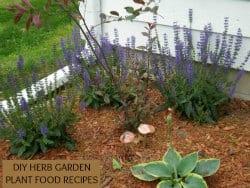 DIY Herb Garden Recipes