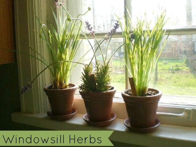 windowsill-herb-garden-how-to