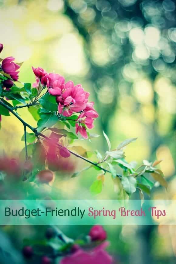 break-budget-spring-break-week