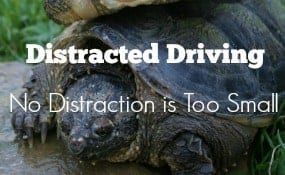 Distracted Driving Turtles