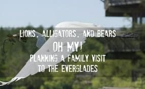 Everglades family vacation ideas