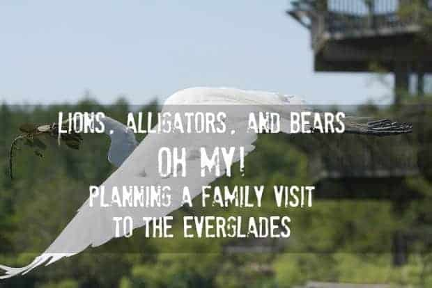 planning-family-vacation-to-everglades