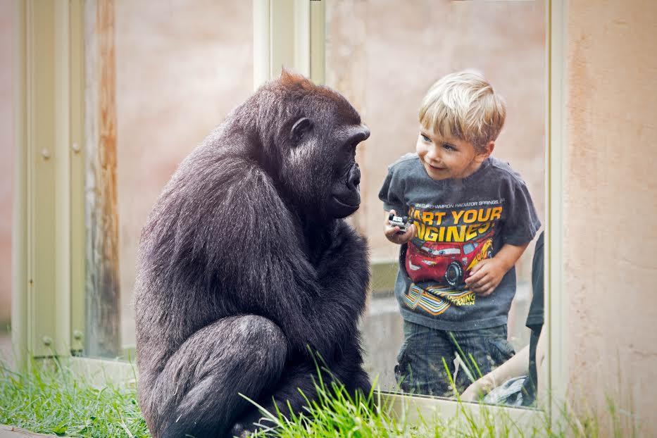 around-the-world-calgary-zoo