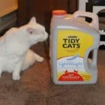 Grab a No-Lug-Jug of Tidy Cats Lightweight Litter at Dollar General