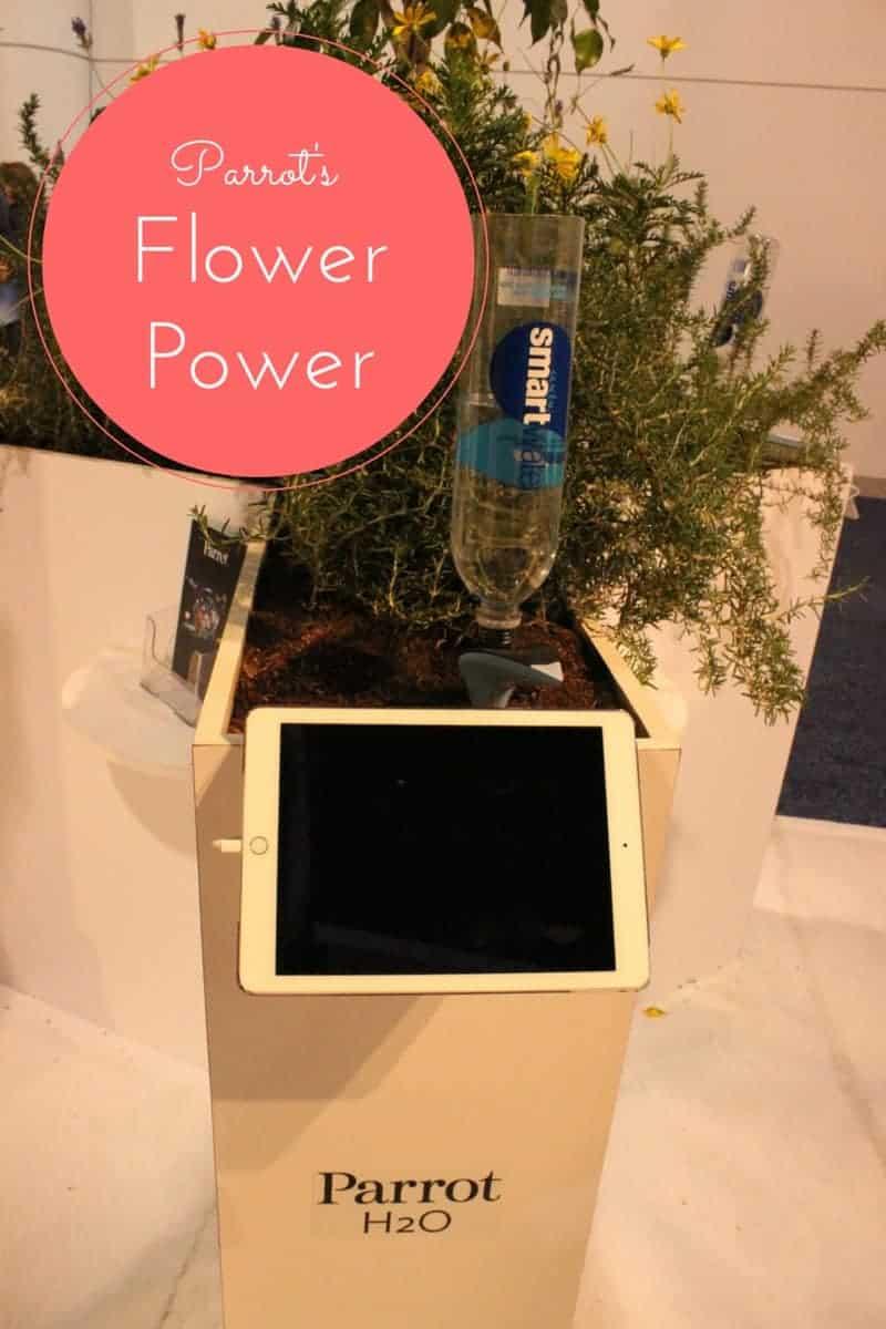Parrot's Flower Power
