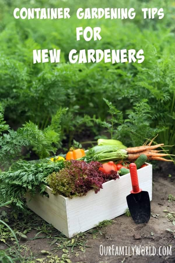 Container gardening tips for new gardeners - Container gardening basics ...