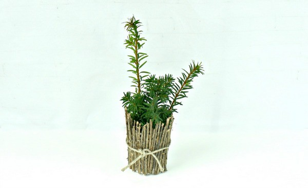 Add a plant to your Father's Day gift idea