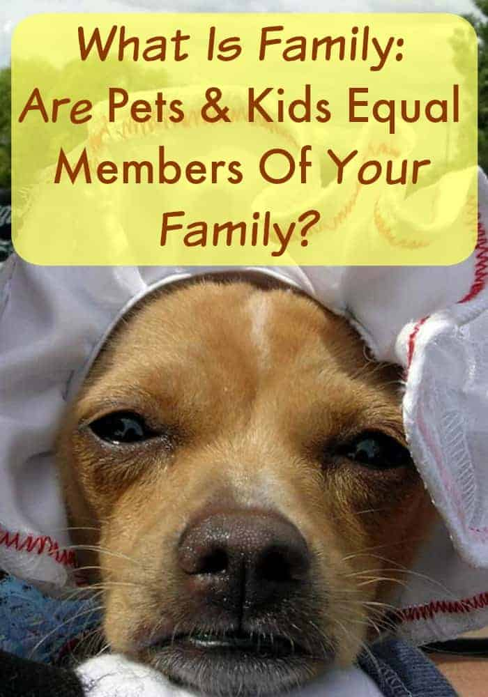 "Pets and kids, are they both equal members of your family? We look deeper and explore if pets should have the title of ""baby"" within families."