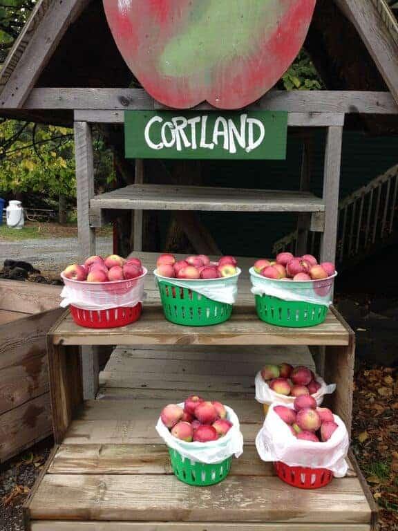 Cortland Apples Best Apple Varieties of Fall