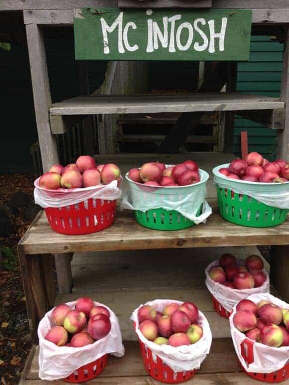 Mcintosh Apples Best Apple Varieties of Fall
