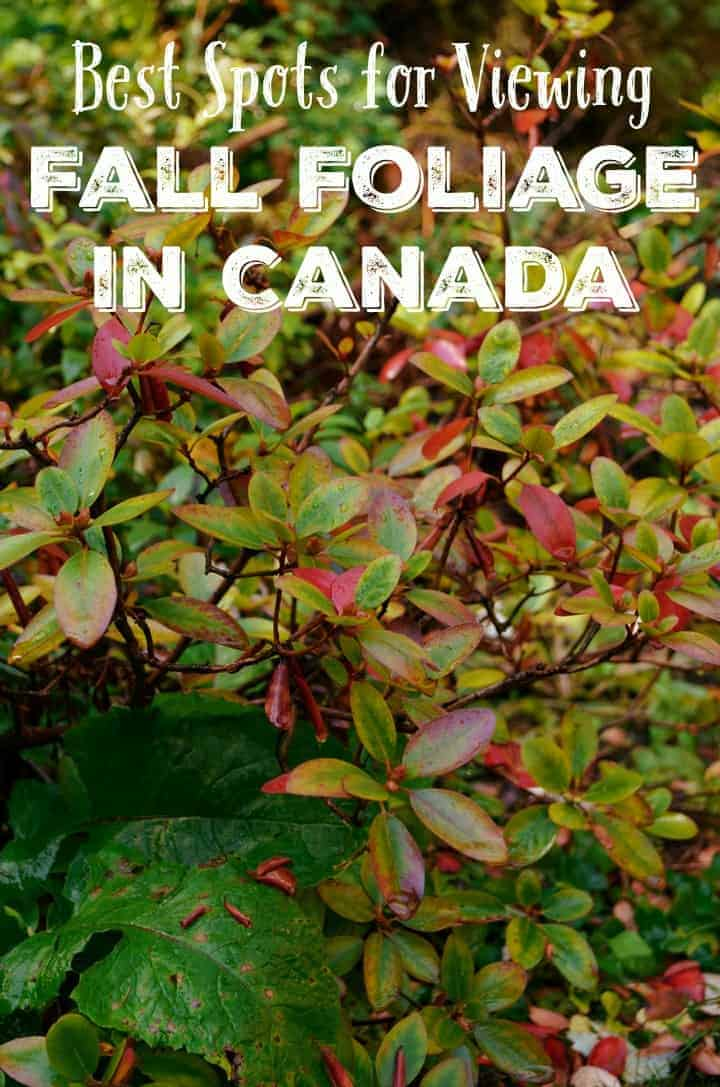 Break out the camera and get ready to catch some stunning pictures when you head to these best spots for viewing fall foliage in Canada! Check them out!