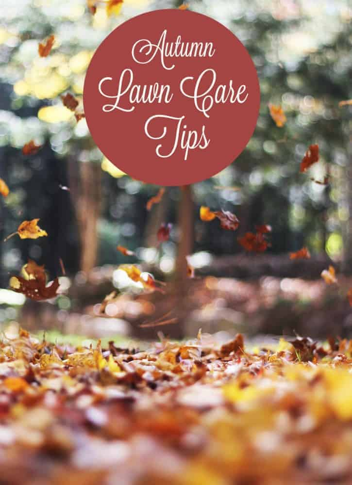 If you give your lawn the attention it needs now, you will end up with a healthy lawn in the spring. Here are some lawn care tips for autumn.