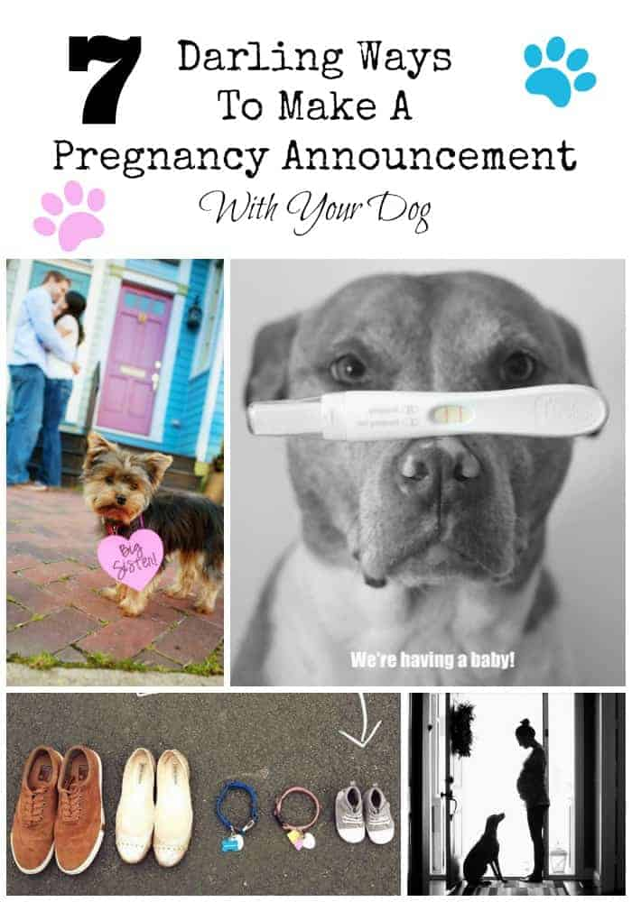 7 Ways To Make A Pregnancy Annoucement With Your Dog