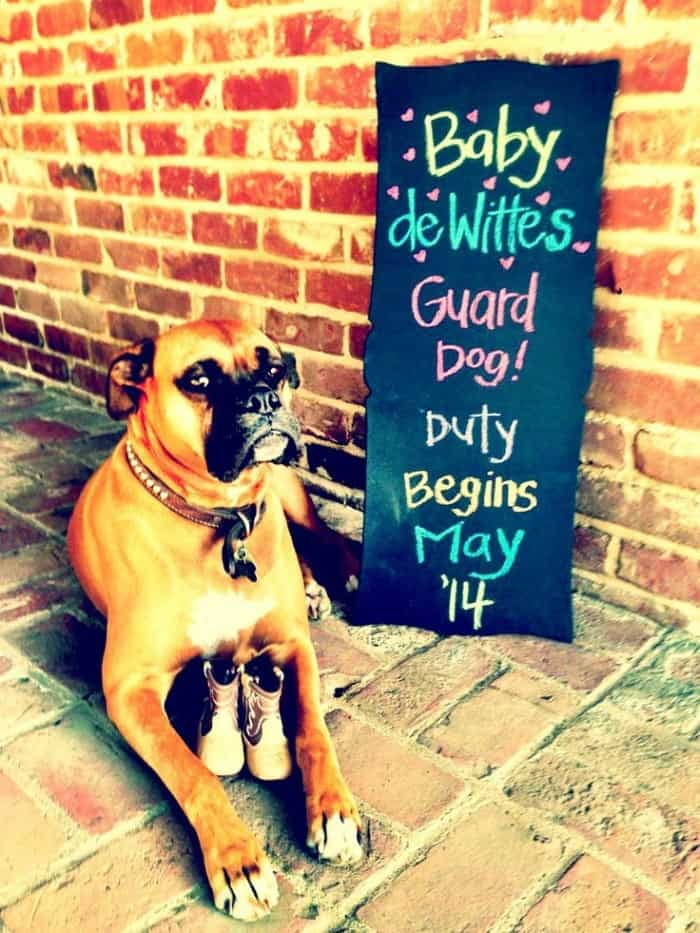 7-darling-ways-make-pregnancy-announcement-dog