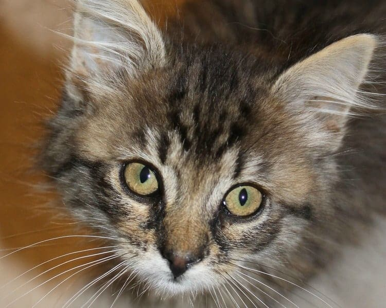 Bringing home a new cat? Check out these easy tips to make him or her feel comfortable and welcome in your home!