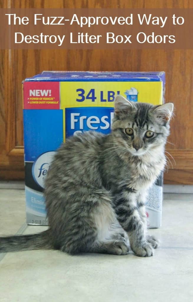 litter-box-odor-fresh-step