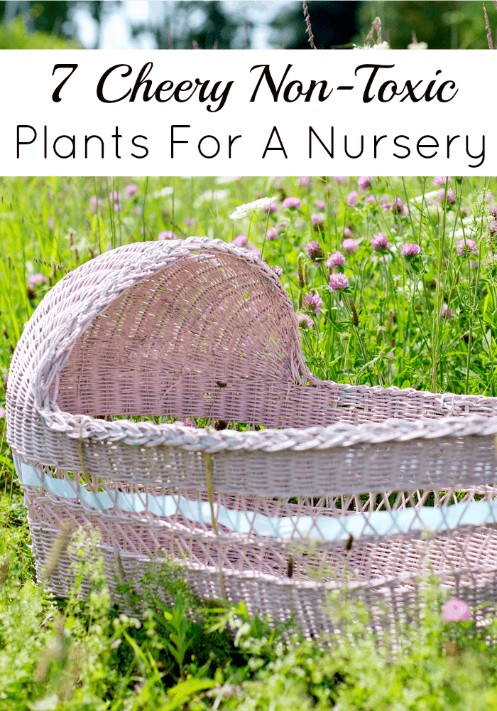 Getting non-toxic plants for a nursery is a beautiful way to bring a piece of the outside into your baby's world. Use our guide to pick safe choices!