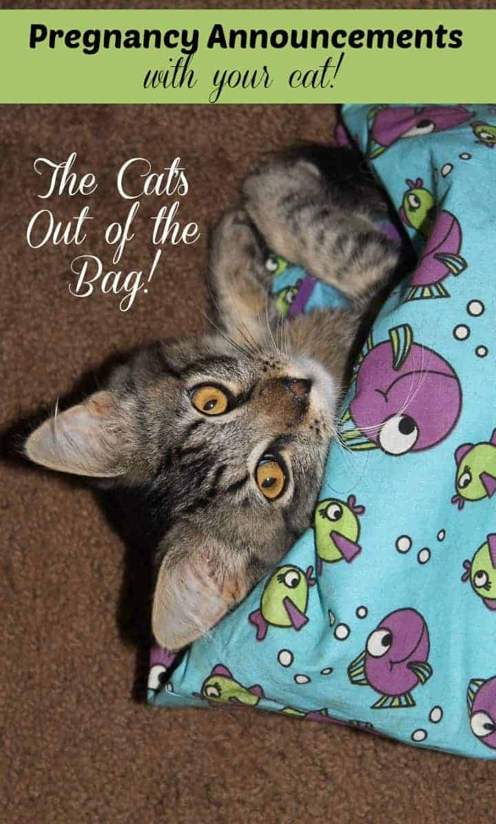 Pets are part of your family, so why not make pregnancy announcements that include your cat? Check out our hilarious and sweet ideas.