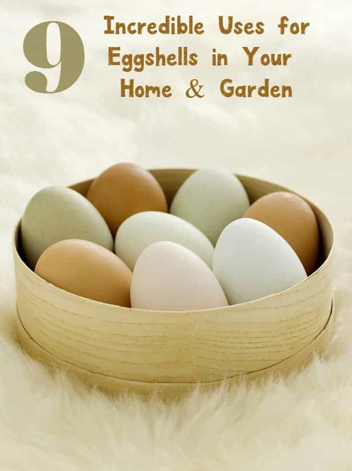 Did you know those egg shells have so many other uses aside from protecting your key omelet ingredient? Check out these 9 brilliant uses for eggshells in your home and garden!