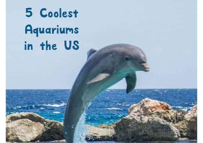 Want to see your child's face light up on your family vacation? Take them to one of these coolest aquariums in the United States!