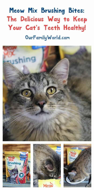 meow-mix-brushing-keep-cats-teeth-healthy