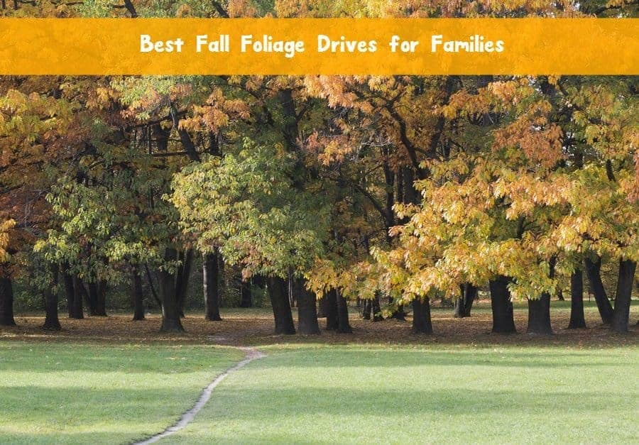 Best Fall Foliage Drives in the U.S. Kids Will Love