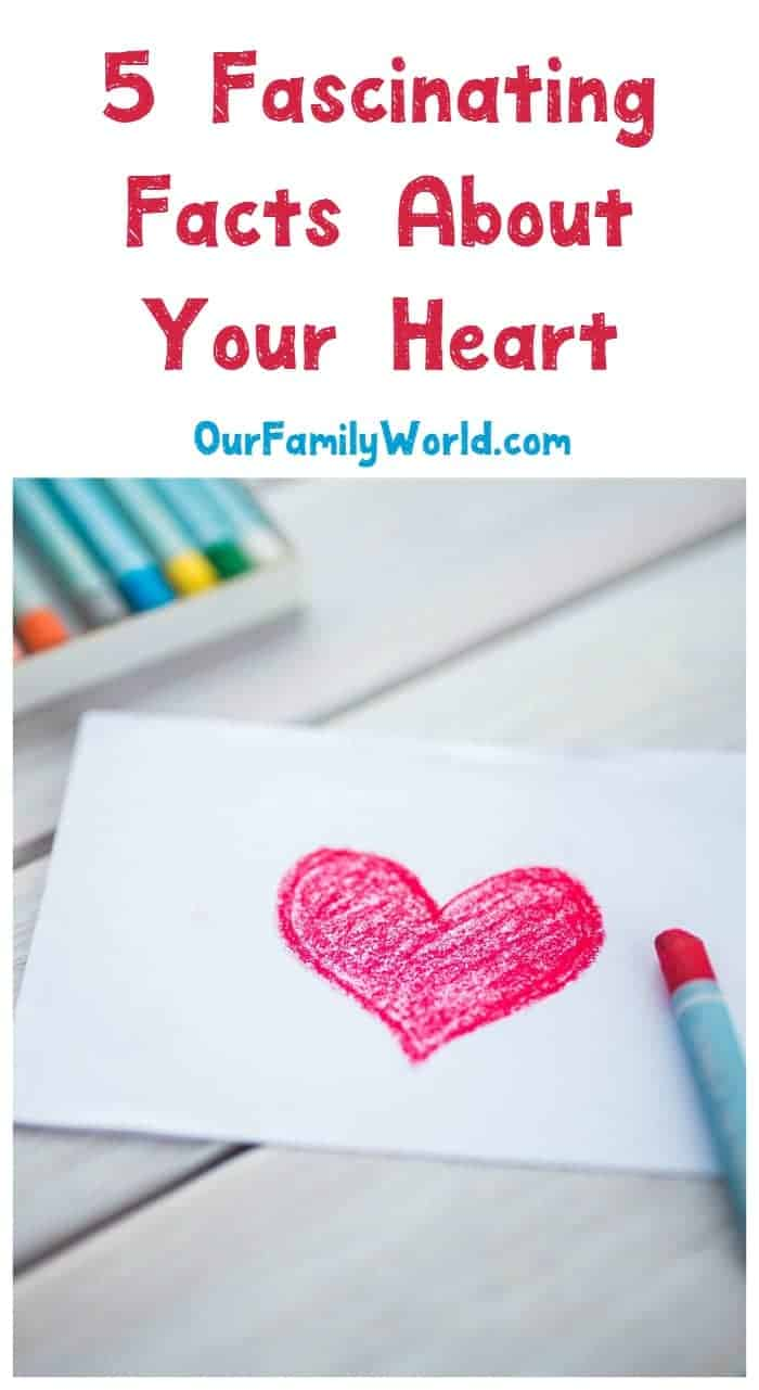 Celebrate Heart Month by getting to know your hardest working organ with these five fascinating facts about your heart + the signs of a heart attack. Read it now!