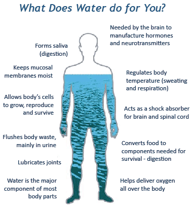 how much water makes up the body